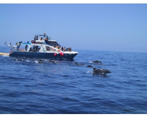 FANCY II - Safari Dolphins and Whales -Adults- Low Season