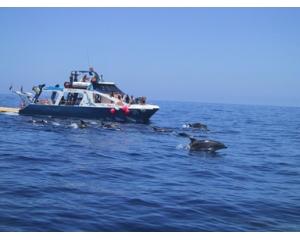 FANCY II - Safari Ballenas + Delfines -Niños